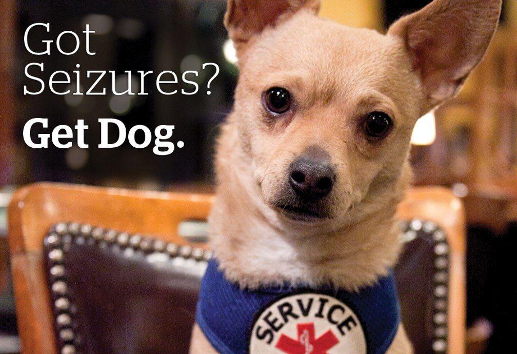 Title: Got Seizures? Get Dog. IMage Chihuahua dot with service vest.