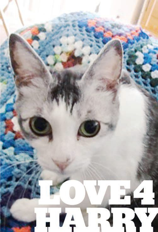 Title: Love for Harry. Image: Harry the Kitty with gray pointy ears, white face and dark gray stripes on his head, with a afghan blanket behind him