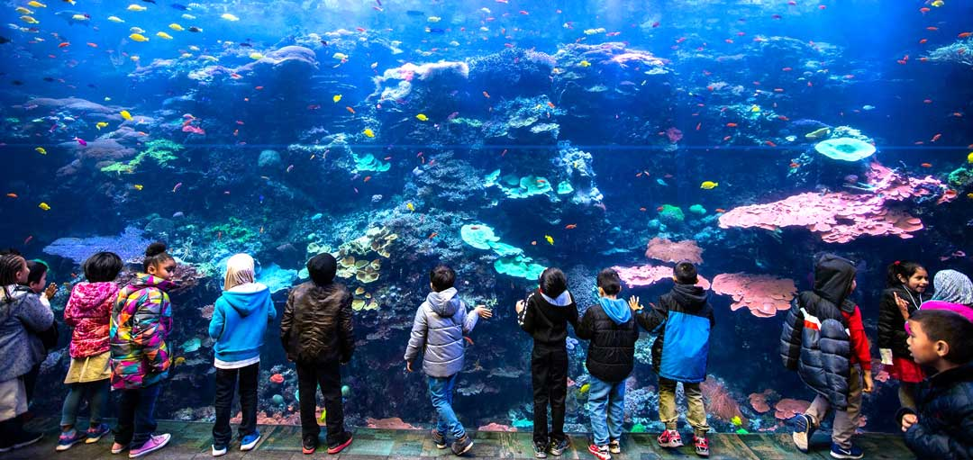Georgia Aquarium Becomes World's First Certified Autism ...
