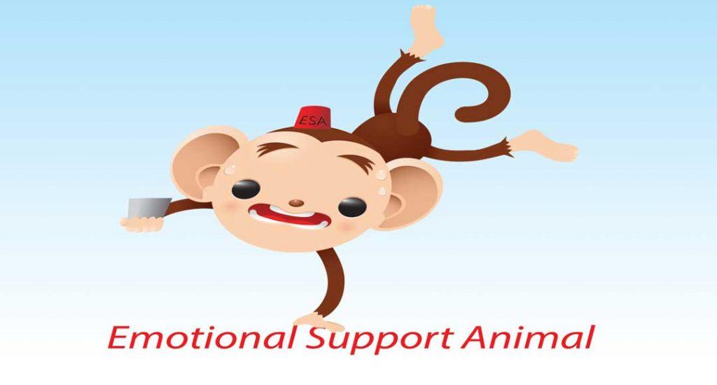Monkey Emotional Support Animal
